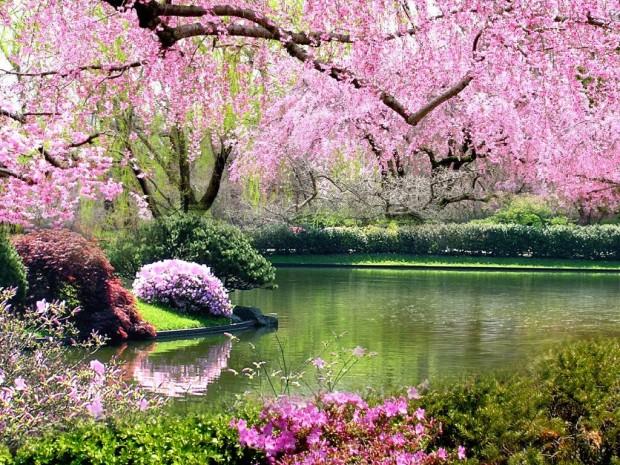 springtime-pictures__1024x768