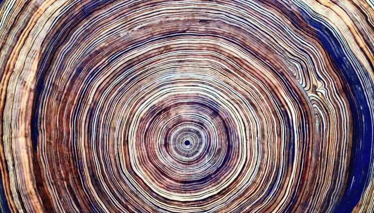 tree_rings_1600